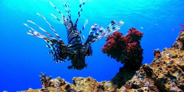Красоты глубин