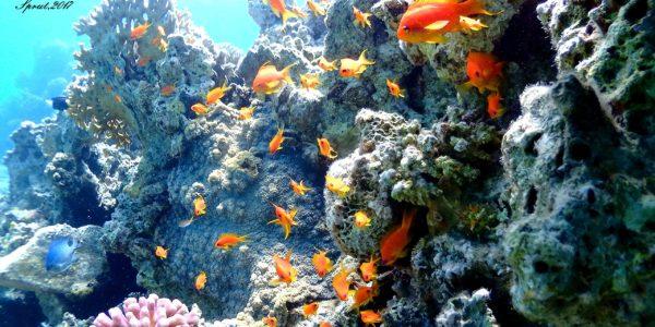 На глубине 12 метров