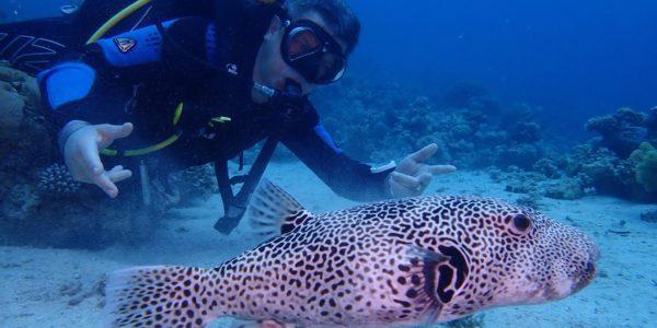 Обитатели подводных глубин